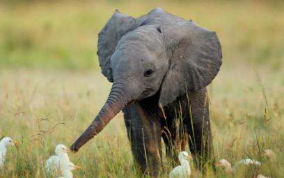 elefante-caza