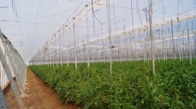tecnologias-para-el-desarrollo-de-agricultura-protegida-en-cibnor-01