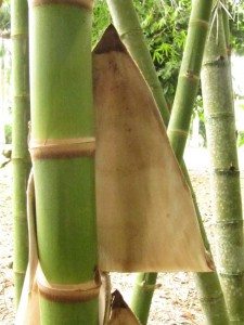 3 bambu