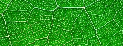 1 fotosintesis